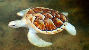 Kosgoda Turtle Hatchery