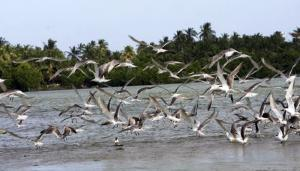 Negombo Lagoon Tour