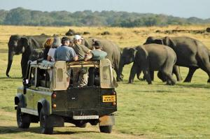 Wild Life Tour Of Sri Lanka
